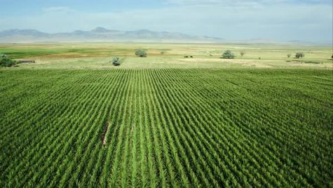Utah rule might let farmers cultivate hemp for research
