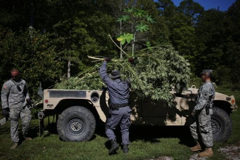 States begin crackdown on black market cannabis