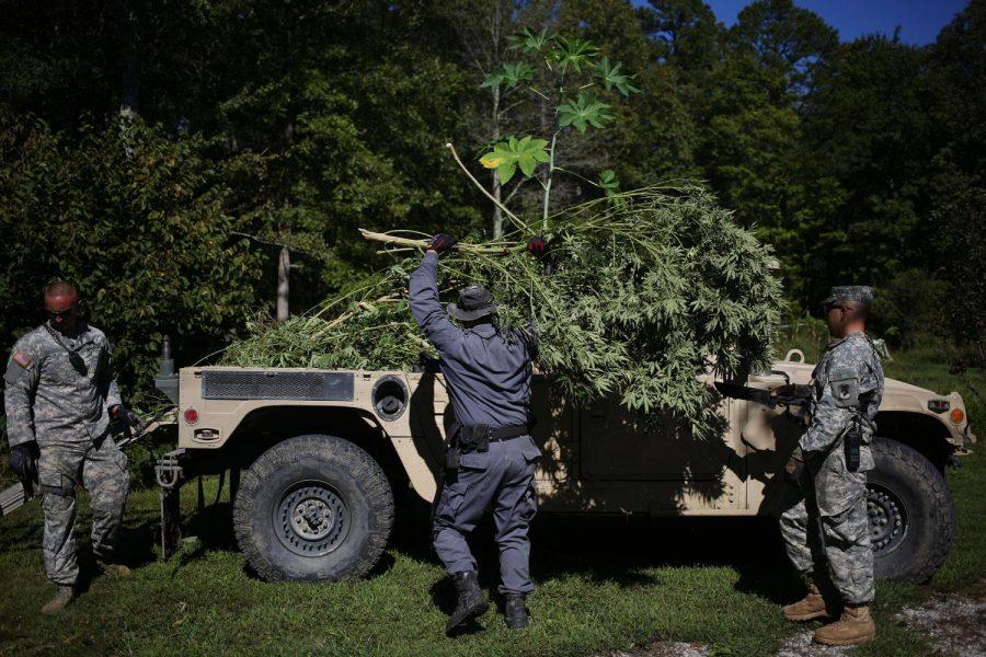 States+begin+crackdown+on+black+market+cannabis
