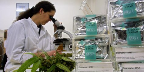 Justice Department takes no action on cannabis research applicants