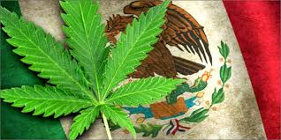 Mexican government will provide CBD to patients in need