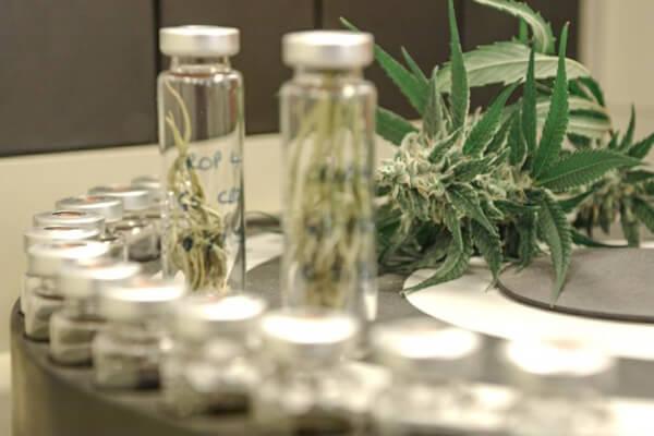 Pesticide testing now mandatory for all Oregon cannabis