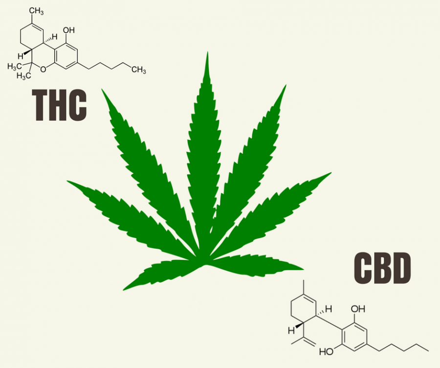 Study: High CBD levels in cannabis can counteract negative side-effects of THC