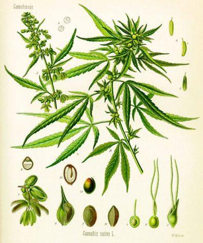 Colorado university exhibit celebrates cannabis art and science
