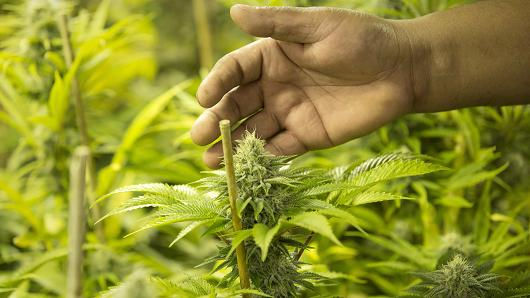 Another country is working on legalizing cannabis