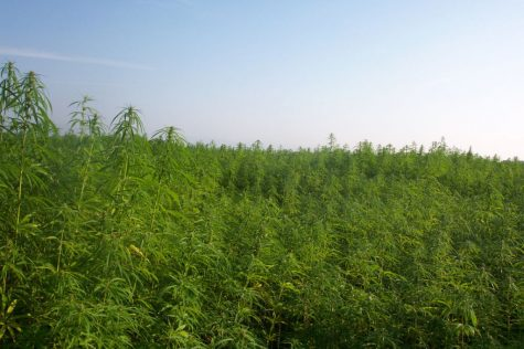 Northwest Wisconsin Chippewa ready to grow hemp for medical purposes