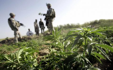 U.S. Army is granting more cannabis waivers