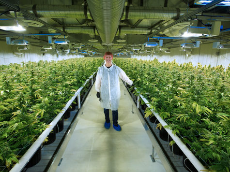 Aurora Cannabis stops production at Alberta greenhouse 'indefinitely'