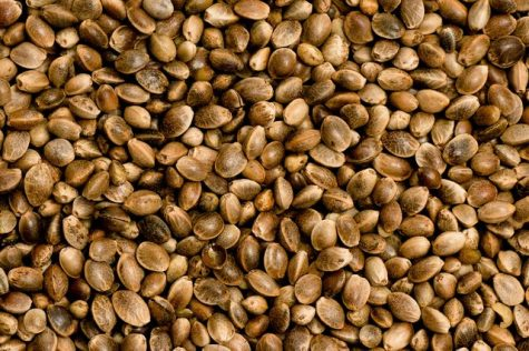 Colorado is now home to the first US-bred CDA approved hemp seed