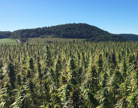 Arizona governor signs hemp farming bill