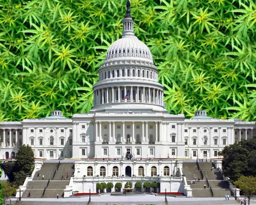 Trump officials urged by lawmakers to lift restrictions on cannabis research