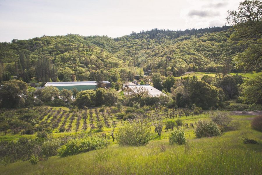 A cannabis brand is all set to turn former California winery into first-ever cannabis tourist site