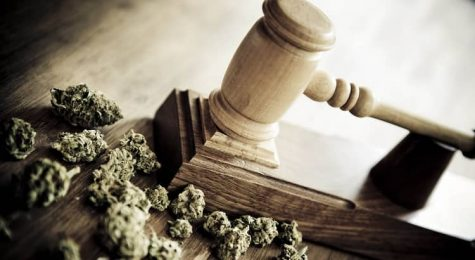 Federal judge drops cannabis trimming company