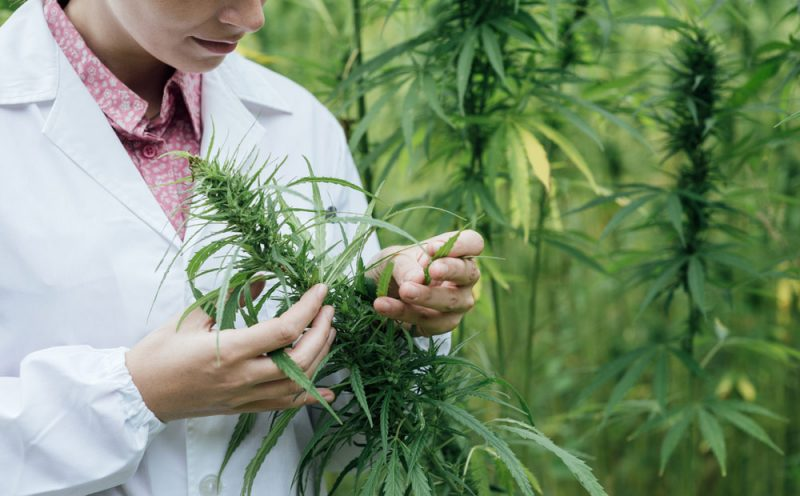 The top medical cannabis studies of 2017