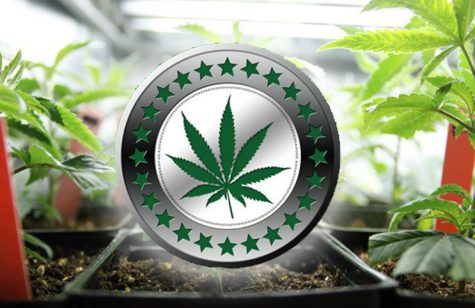 http://marijuanastocks.com/wp-content/uploads/2017/06/marijuana-stocks-cryptocurrency.jpg
