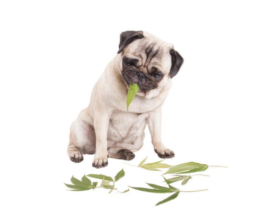 https://www.theunion.com/wp-content/uploads/2017/11/Cute-Dog-Pot-1240x1006.jpg
