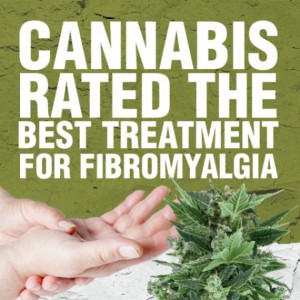 Cannabis is effective at treating fibromyalgia, according to this study.