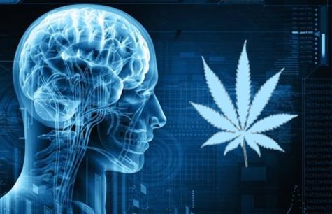 The Brain Loves CBD: What are the effects of this major cannabinoid?