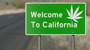 Small-scale cannabis growers in California establish co-ops to cut costs and remain competitive