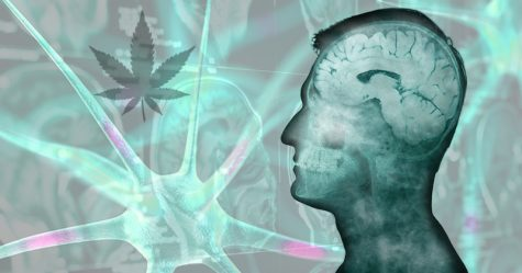 JAMA study finds overstated cognitive deficits in past cannabis studies on youths