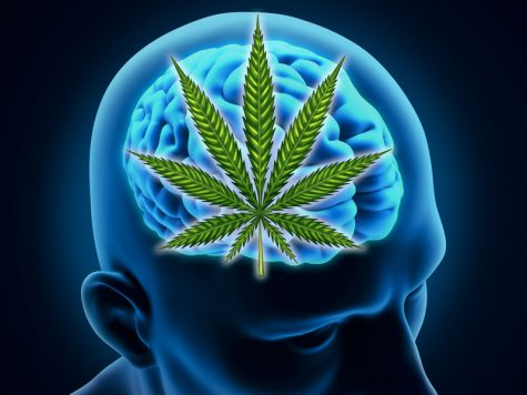 Studies explore cannabis' impact on the developing brain