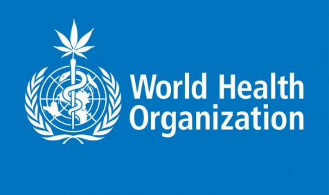 "United Nations Drug Committee says cannabis is a ""relatively safe drug"""