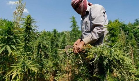 Lebanon parliament will vote on law to legalize medical and industrial cannabis cultivation