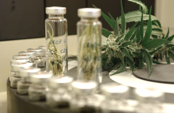 https://www.google.com/search?client=safari&rls=en&biw=1280&bih=739&tbm=isch&sa=1&ei=u9k8W9jyF6mD8gK_x63YBQ&q=cannabis+lab+testing&oq=cannabis+lab+testing&gs_l=img.3..0j0i24k1l9.62097.68999.0.69705.32.17.5.2.3.0.519.4698.0j4j8j0j1j3.16.0....0...1c.1.64.img..9.23.5398...0i67k1j35i39k1j0i30k1.0.oI73DIoSYio#imgrc=ftzpvp98GtMTzM: