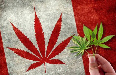 Legal cannabis spending in Canada is on the rise