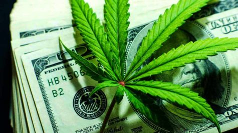 Investing in cannabis: Is it a wise move to make?