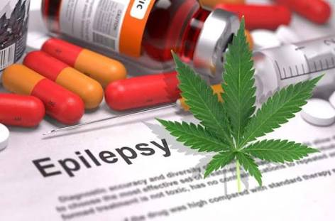 Cannabis study: Whole-plant cannabis is more powerful at treating epilepsy than CBD