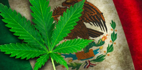 Mexico takes big strides towards cannabis legalization