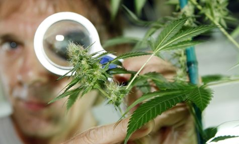 http://world.edu/israel-country-leading-cannabis-research-heres/