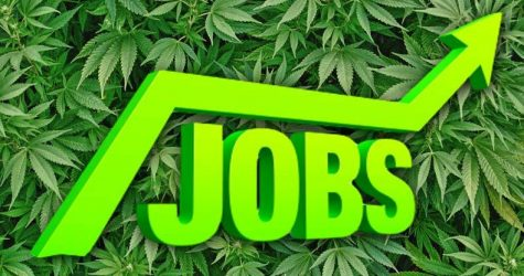 Demand soars 76 percent for cannabis jobs, which pay 11 percent more than median U.S. salary