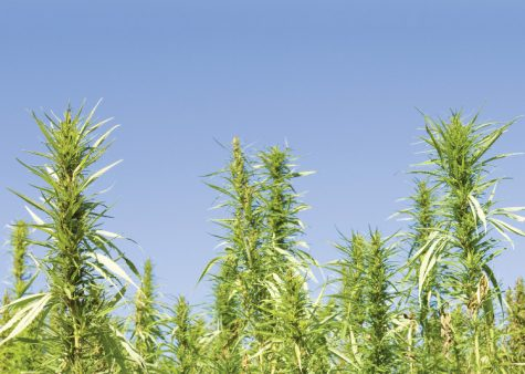 USDA encouraged comments on hemp for its webinar on the 2018 Farm Bill