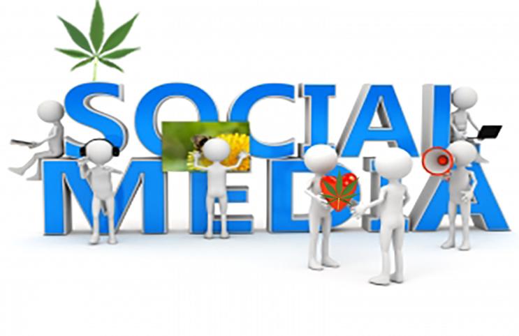 Cannabis videos spark social media trend after garnering