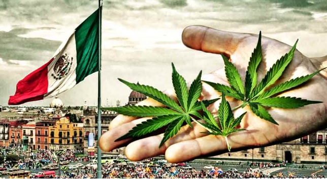 https%3A%2F%2Fwww.theyucatantimes.com%2F2019%2F02%2Fmexico-legalizes-marijuana-for-recreational-purposes%2F