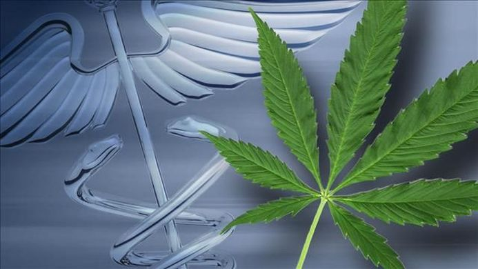 Alabama wants to speed up the process of medical cannabis cultivation: potential benefits and concerns