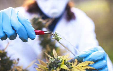 Using cannabis to treat ADHD: Does CBD work?