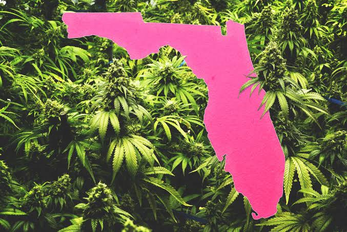 Cannabis+legalization+initiatives+are+making+their+way+to+the+2020+Florida+ballot