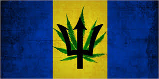 Barbados may join other Caribbean countries in legalizing medical cannabis