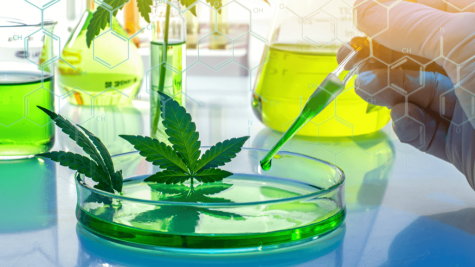 Researchers demonstrate how CBD hinders psychoactivity of THC