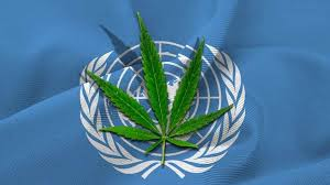 UN drug chief says recreational cannabis legalization breaches international drug control treaties