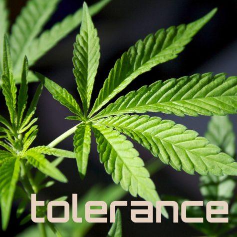 Study: Neurobiological mechanisms that influence cannabis tolerance