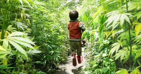 Study demonstrates success in using CBD for behavioral problems in children