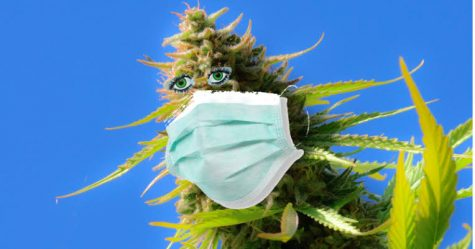 Coronavirus is stimulating a wave of new job opportunities in the U.S. cannabis space
