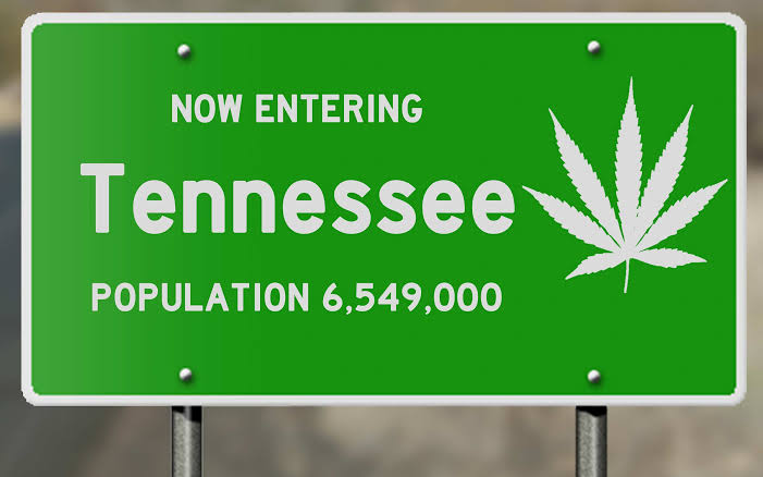 Tennessee's medical cannabis bill failed, but progress cannot be ignored