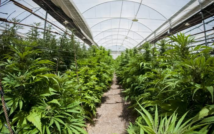 The+Parent+Company+gears+up+to+broaden+cannabis+supply+with+%2467+million+investment