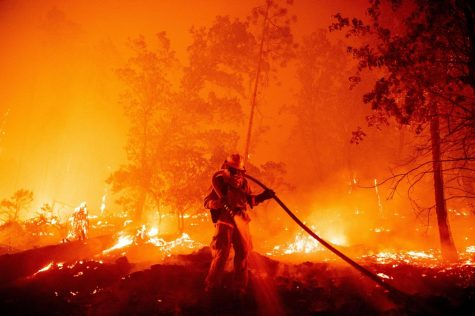 California's cannabis grow sites are in danger of wildfire damage